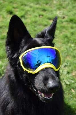 Die Brille Lässt Alles Besser Werden 1